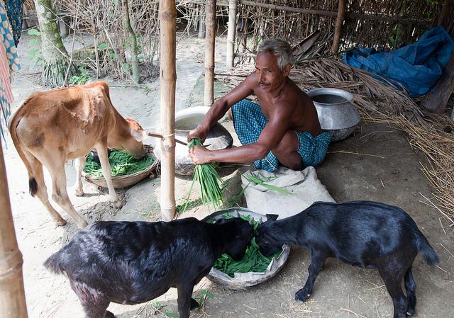 Goat Rearing_BD